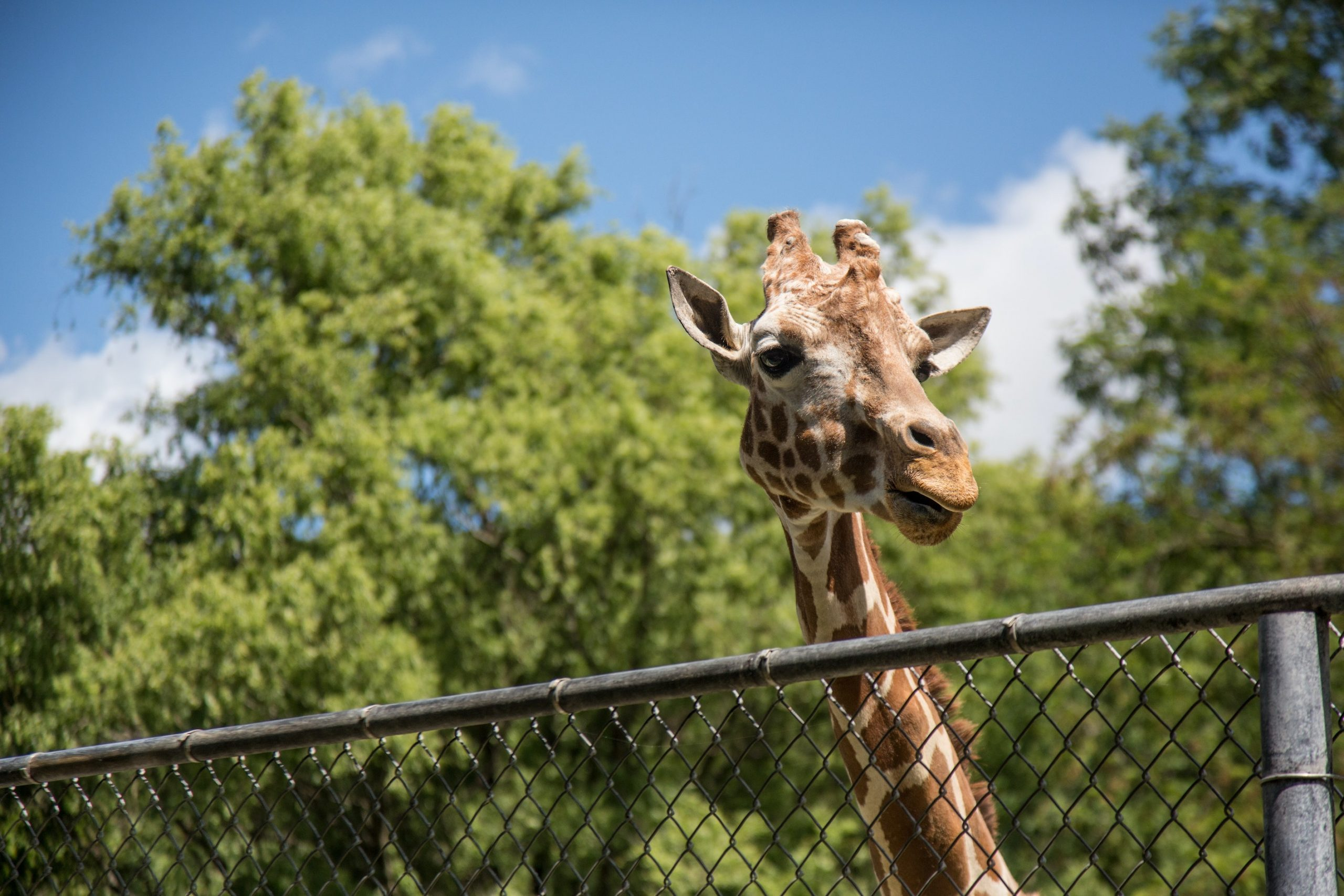 Why You Need To Keep An Extra Eye On Children At The Zoo